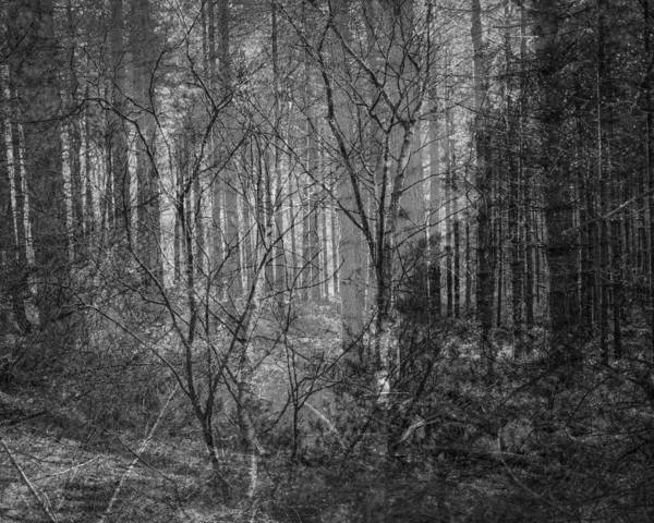Nottingham Photograph - Trees Upon Trees by Chris Dale