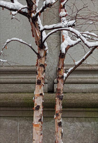 Trees Wall And Snow Art Print
