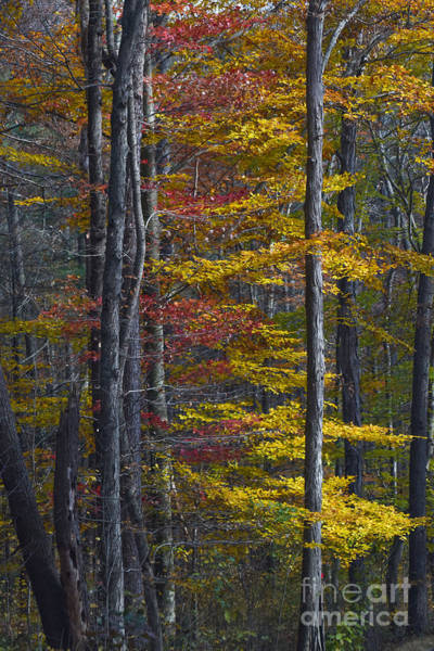 Photograph - Trees With Autumn Colors 8260c by Cynthia Staley