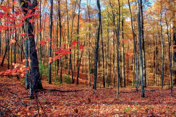 Photograph - Treescape No2 by Sam Davis Johnson