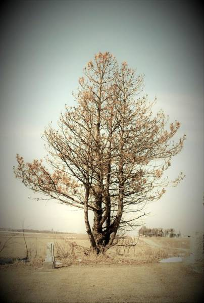 Wall Art - Photograph - Treetop by Toni Grote