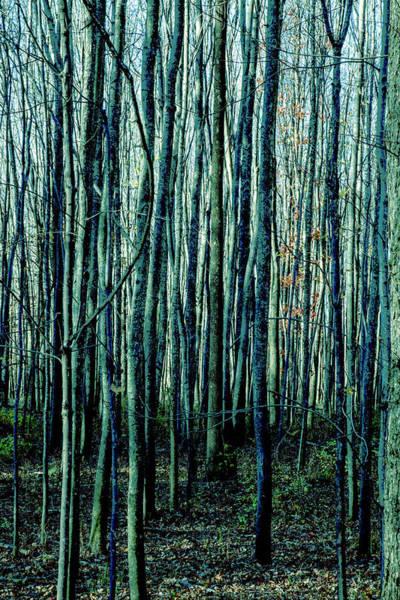 Photograph - Treez Cyan by Lon Dittrick