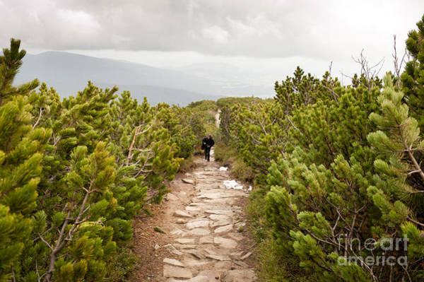 Wall Art - Photograph - trekking in Pinus mugo by Arletta Cwalina