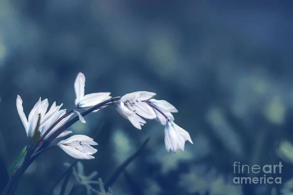Flower Stem Photograph - Tremble by Evelina Kremsdorf