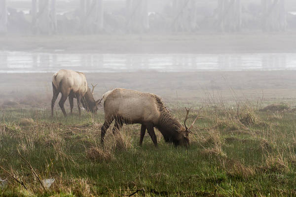 Photograph - Trestle Bay And Bull Elk by Robert Potts