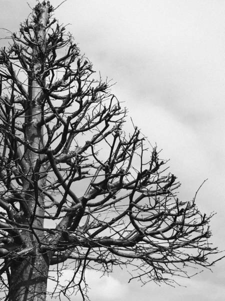 Black And White Nature Photograph - Triangle Tree by Linda Woods