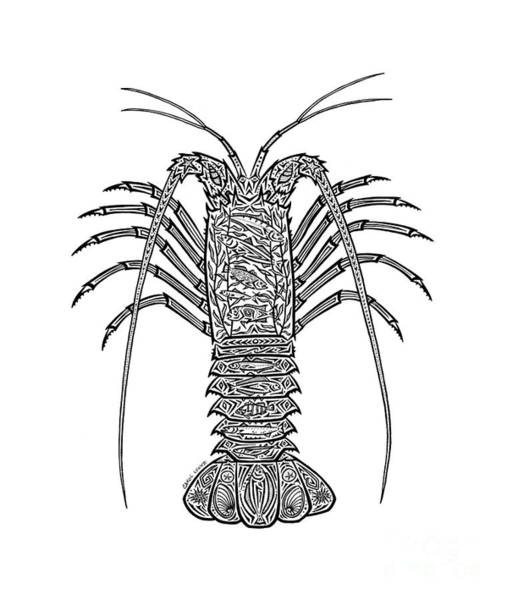 Wall Art - Drawing - Tribal Spiny Lobster by Carol Lynne