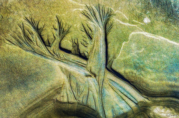 Photograph - Tributaries In The Sand by Dee Browning