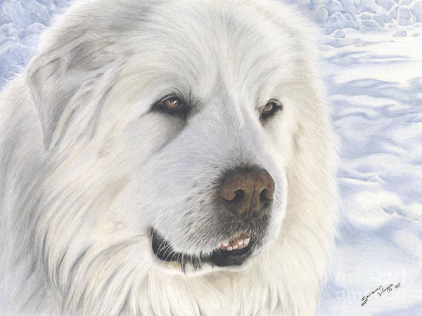 Furry Drawing - Tribute To Pyreless The Great Pyrenees Mountain Dog by Sheldene Visagie
