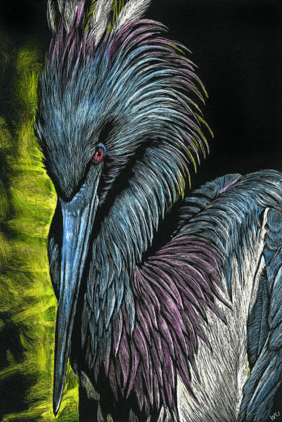 Drawing - Tricolor Bird by William Underwood