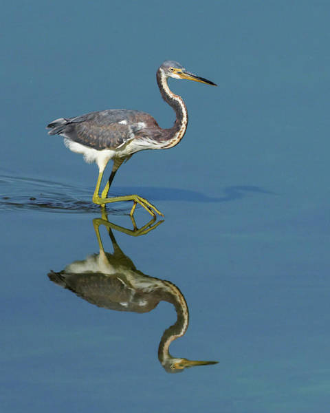 Photograph - Tricolor Reflection by Dawn Currie