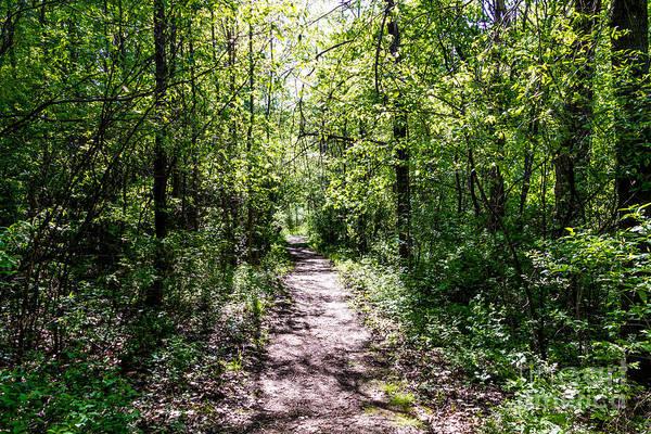 Photograph - Trillium Trail by William Norton