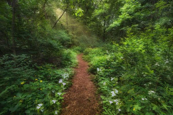 Photograph - Trillium Woods by Robin-Lee Vieira
