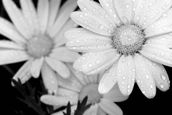 Photograph - Trio - Black And White by Angela Rath