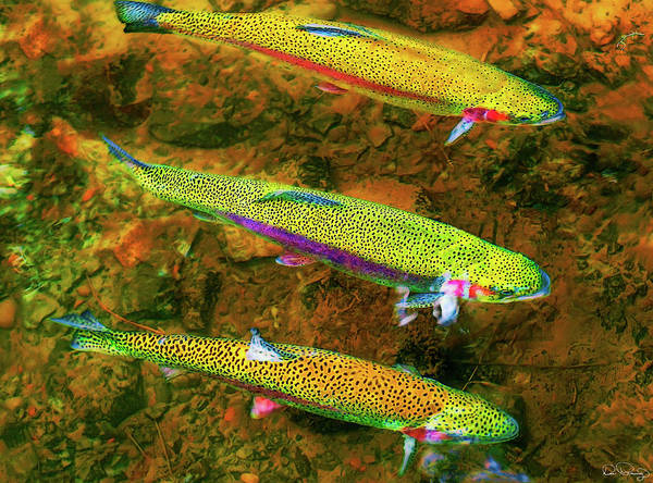 Photograph - Trio Of Rainbow  by Dee Browning