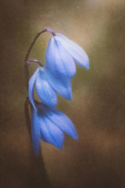 Wall Art - Photograph - Trio Of Spring Flowers by Scott Norris