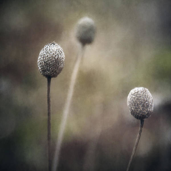 Weeds Photograph - Trio by Scott Norris