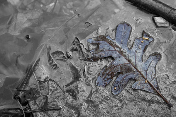 Photograph - Triple Falls Leaf II by Dylan Punke