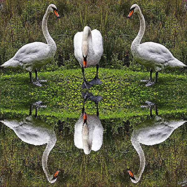 Triplets Photograph - Triplets In Reflection by Chris Lord