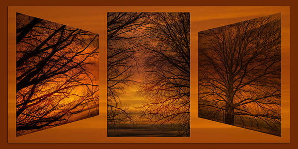 Wall Art - Photograph - Triptychs Spring Tree Branches Twilit Moment 01 by Thomas Woolworth