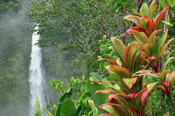 Photograph - Tropical Akaka Falls by Bruce Gourley