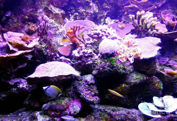 Photograph - Tropical Aquarium by Francesca Mackenney