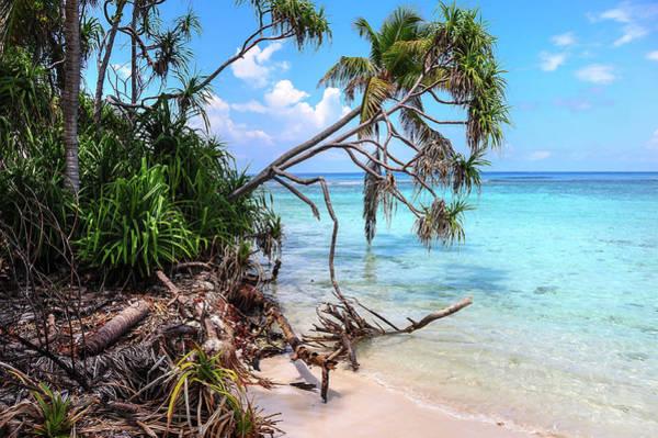 Photograph - Tropical Beach by Jenny Rainbow