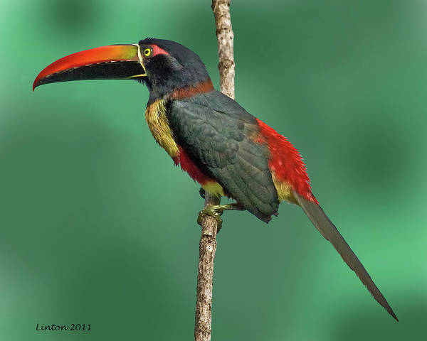 Photograph - Tropical Beauty by Larry Linton