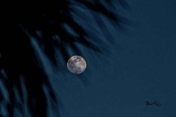 Photograph - Tropical Blue Moon by Susan Molnar