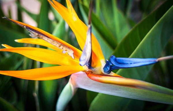 Tropical Closeup Art Print