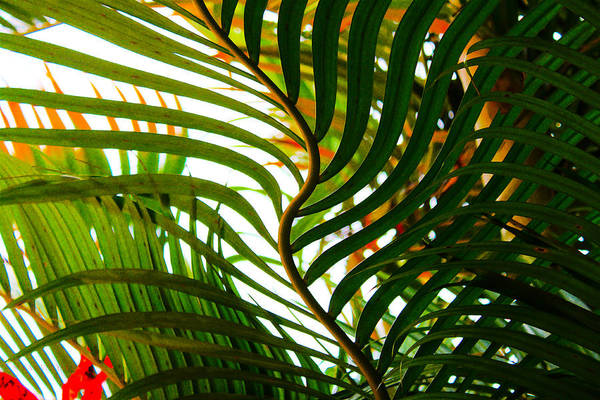Photograph - Tropical Dance by Susan Vineyard