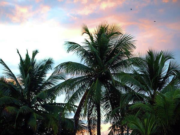 Photograph - Tropical Dawn I I by Newwwman