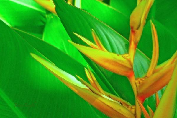 Wall Art - Photograph - Tropical Day Dream by James Temple