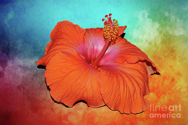 Wall Art - Photograph - Tropical Delight By Kaye Menner by Kaye Menner