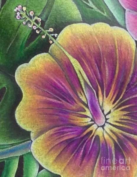 Hibiscus Flower Drawings | Fine Art America