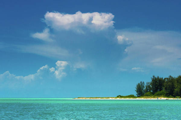 Photograph - Tropical Dreams by Susan Molnar
