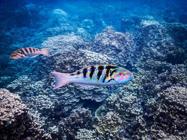 Photograph - Tropical Fish Bay by Michael Scott