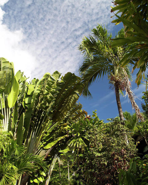 Photograph - Tropical Foliage by Pauline Walsh Jacobson