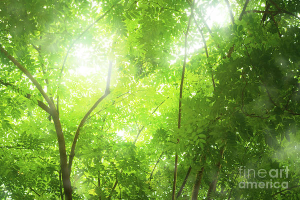 Humid Photograph - Tropical Forest by Atiketta Sangasaeng