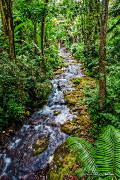 Photograph - Tropical Forest Stream by Christopher Holmes
