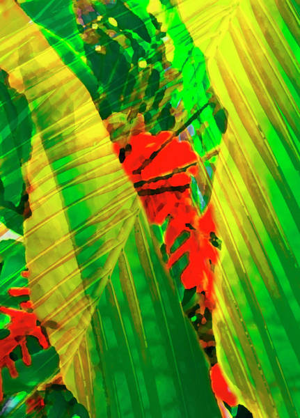 Tropical Photograph - Tropical Fusion by Stephen Anderson