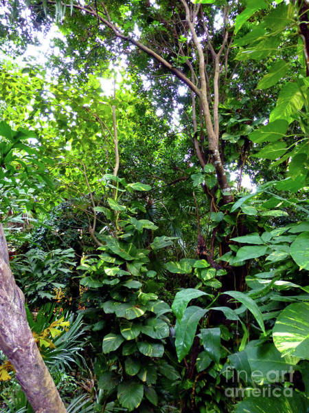 Photograph - Tropical Garden by Francesca Mackenney