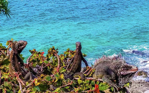 Wall Art - Photograph - Tropical Iguanas by Colleen Kammerer