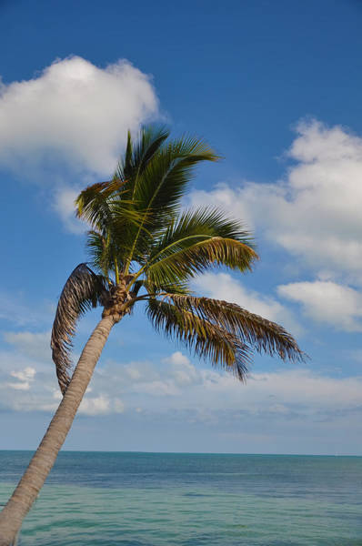 Photograph - Tropical Island Paradise by Bill Cannon