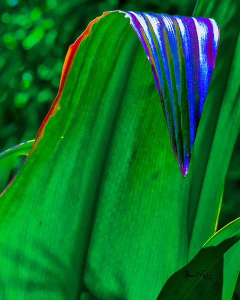 Photograph - Tropical Leaves by Susan Molnar
