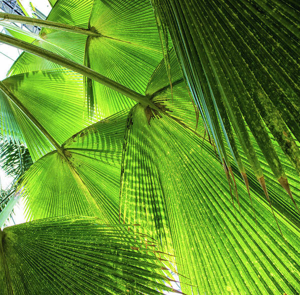 Tropical Climate Photograph - Tropical by Martin Newman