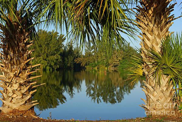 Wall Art - Photograph - Tropical Nature In Florida by Zal Latzkovich