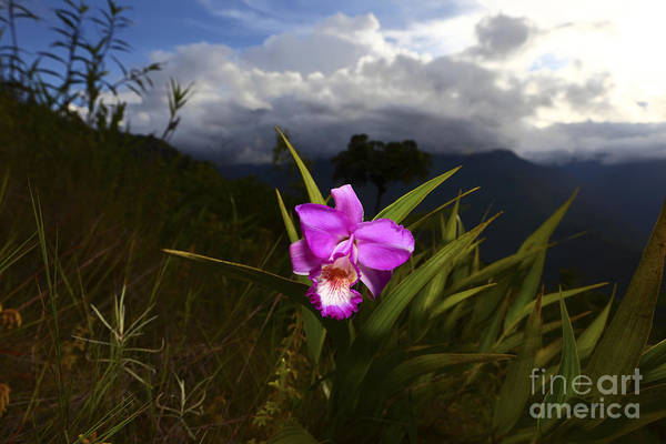 Photograph - Tropical Orchid Beauty Bolivia  by James Brunker