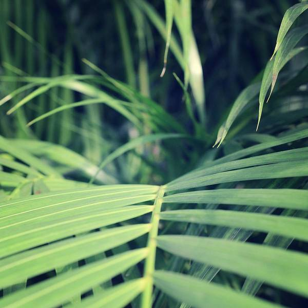 Photograph - Tropical Palms by Marianna Mills