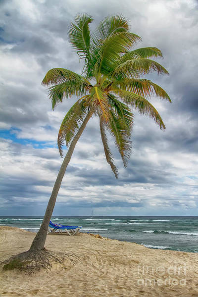 Photograph - Tropical Paradise 2 by Teresa Zieba